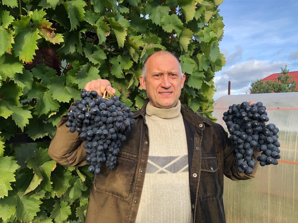 Виноградник Жилина.