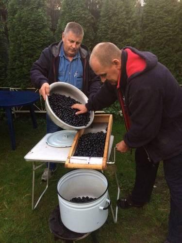 Дробление винограда