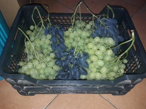 виноградник Пузенко
