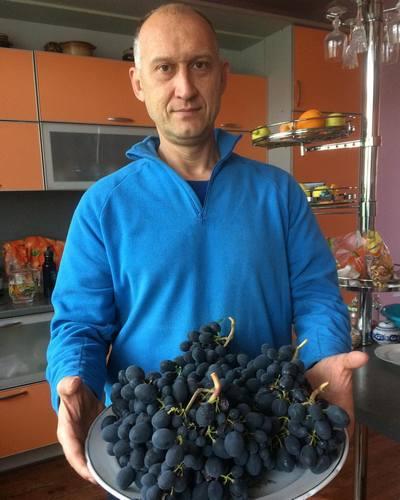Виноград Чёрный монарх СК-28