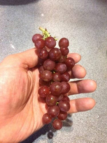 Виноград Эйнсет сидлис 2017