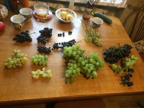 Выставка винограда у Сергея Андреева